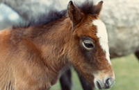 Foal image for society of equine consultants