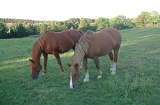 Equine Behaviour Issues