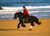 Society of Equine Behaviour Consultants - Horse on the beach