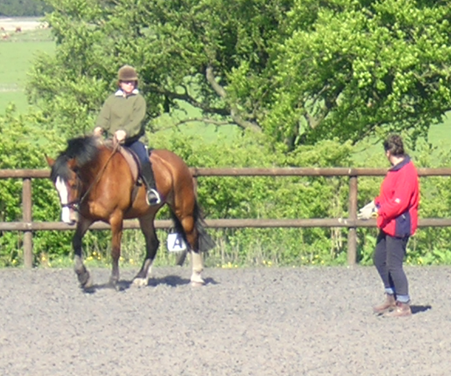 Society of Equine Behaviour Consultants Professional Training