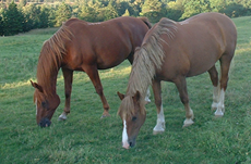 Society of Equine Behaviour Consultants