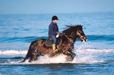 Horse in the sea image - why choose a registered equine consultant
